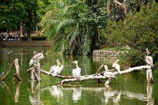 Storks Resting Stock Photography