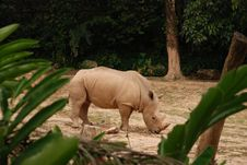 Free Rhinoceros In Zoo Royalty Free Stock Photo - 9781895
