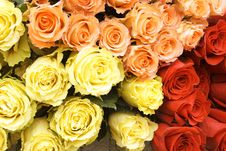 Free Bouquet Of Multi-coloured Roses Royalty Free Stock Photos - 9781988