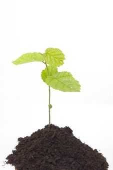 New Life Coming Royalty Free Stock Photo