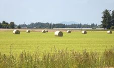 Large Hay Bales In Rural Field Royalty Free Stock Image