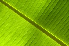 Free Background Of Leaf, Diagonal Royalty Free Stock Image - 9783666