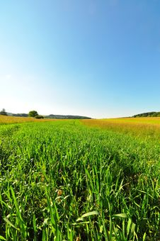 Free Summer Meadow Stock Image - 9784921