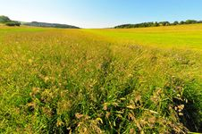 Free Summer Meadow Stock Image - 9785181