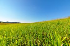 Free Summer Meadow Royalty Free Stock Image - 9785316