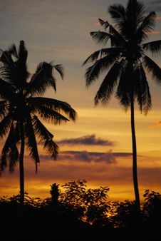 Free Coconut Palms At Sunset Mindanao Philippines 3 Royalty Free Stock Image - 9786456