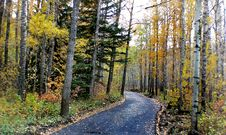 Free Autumn Calgary Alberta &x28;3&x29; Stock Image - 97837911