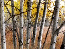 Free Autumn Calgary Alberta &x28;6&x29; Stock Photography - 97837912
