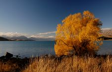 Free Autumn At Lake Tekapo NZ &x28;13&x29; Stock Photos - 97837913
