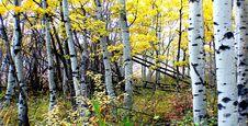Free Autumn Calgary Alberta &x28;7&x29; Stock Images - 97837914