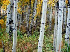 Free Autumn Calgary Alberta &x28;18&x29; Royalty Free Stock Image - 97837936