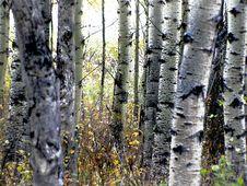Free Autumn Calgary Alberta &x28;19&x29; Stock Images - 97837954