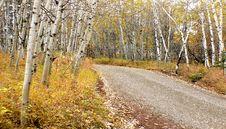 Free Autumn Calgary Alberta &x28;9&x29; Stock Photography - 97838002