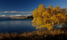 Free Autumn At Lake Tekapo NZ &x28;10&x29; Royalty Free Stock Photos - 97838028