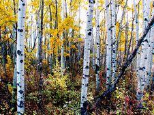 Free The Aspens Fish Creek Calgary. Stock Photography - 97838052