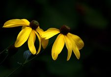Free Yellow Mellow. Stock Image - 97838061