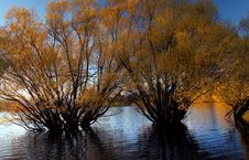Free Autumn At Lake Tekapo NZ &x28;1&x29; Royalty Free Stock Photo - 97838355