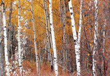 Free Autumn Calgary Alberta &x28;1&x29; Royalty Free Stock Photos - 97838378