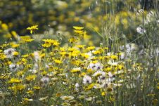 Free Wild Flowers Stock Photos - 97838393