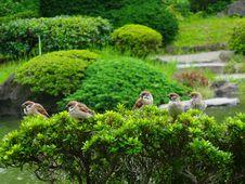 Free Sparrows Stock Photo - 97838470