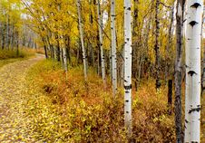Free Autumn Calgary Alberta &x28;4&x29; Stock Photos - 97838583
