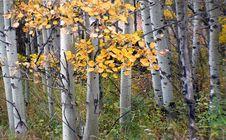 Free Autumn Calgary Alberta &x28;5&x29; Royalty Free Stock Photos - 97838668