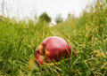 Free Red Apple Stock Photos - 9792223