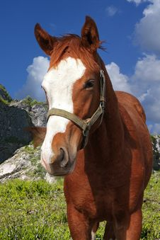 Free Horse Royalty Free Stock Photography - 9791157