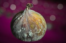 Free Fig On Purple Background Royalty Free Stock Image - 9791836
