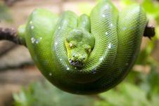 Free Green Snake Stock Photos - 9792643
