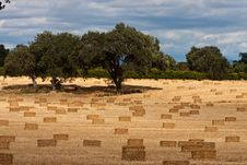 Free Harvest Of Hay Stock Image - 9792791