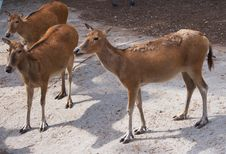 Free Deer Stock Photos - 9794793