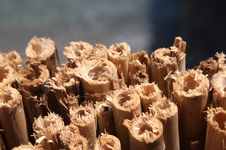Free Worm On A Bamboo Stock Images - 9794864