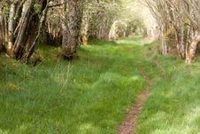 Free Rural Road Stock Image - 9796751