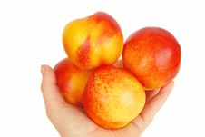 Free Nectarines In The Arm. Royalty Free Stock Photo - 9796865
