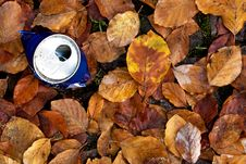 Free Tin Among The Leaves Stock Photography - 9797002