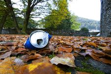 Free Tin Among The Leaves Royalty Free Stock Photos - 9797098
