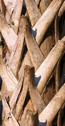 Detail Of Palm Tree Trunk Royalty Free Stock Image