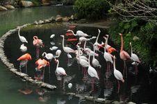 Free Bird Stock Photo - 9799570