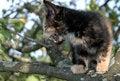 Free Crying Kitten Royalty Free Stock Image - 980896
