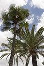 Free Palm Trees & Sky Royalty Free Stock Photos - 988718