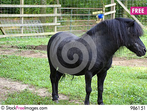Free Miniture Stallion Stock Image - 986151