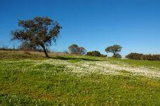 Free Landscape Stock Photography - 980192