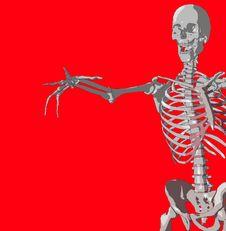 Free Bone 106 Stock Image - 980261