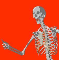 Free Bone 224 Stock Photos - 980263
