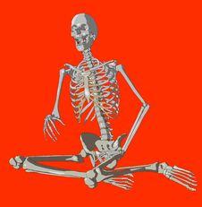 Free Bone 226 Stock Images - 980264