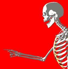Free Bone 230 Stock Photography - 980272