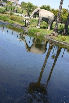 La Brea Tar Pits Royalty Free Stock Image