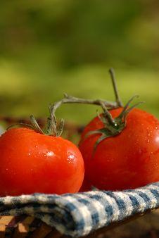 Free Tomatoes Stock Photos - 982853