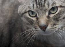 Free Cat Sight Royalty Free Stock Image - 983456